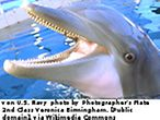 Delfin / By U.S. Navy photo by Photographer's Mate 2nd Class Veronica Birmingham. [Public domain], via Wikimedia Commons